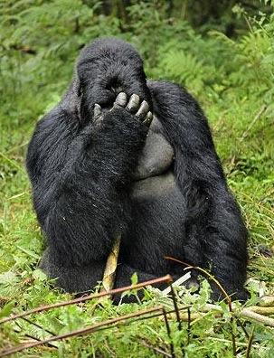 Gorilla-hungover_1370932i