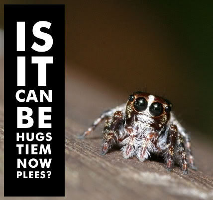 Is_it_can_be_hugs_tiem_now_spider