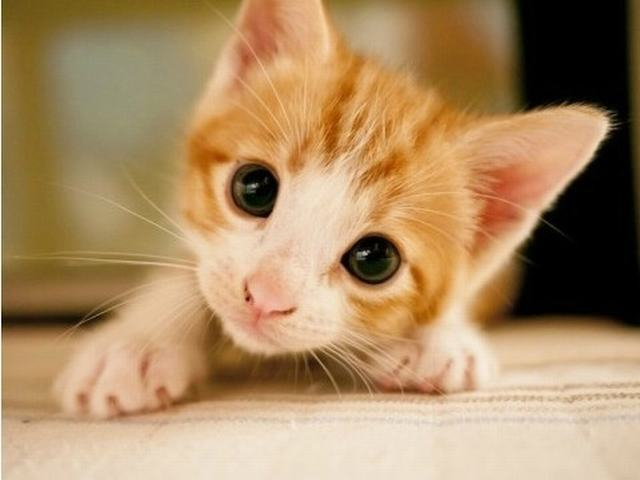 cute_kittens_cell_phone_wallpapers_640x480_01_by_captainjimmy99999-d6oq279