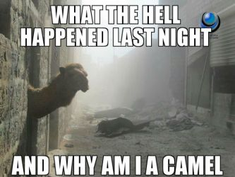 why-am-i-a-camel.jpg