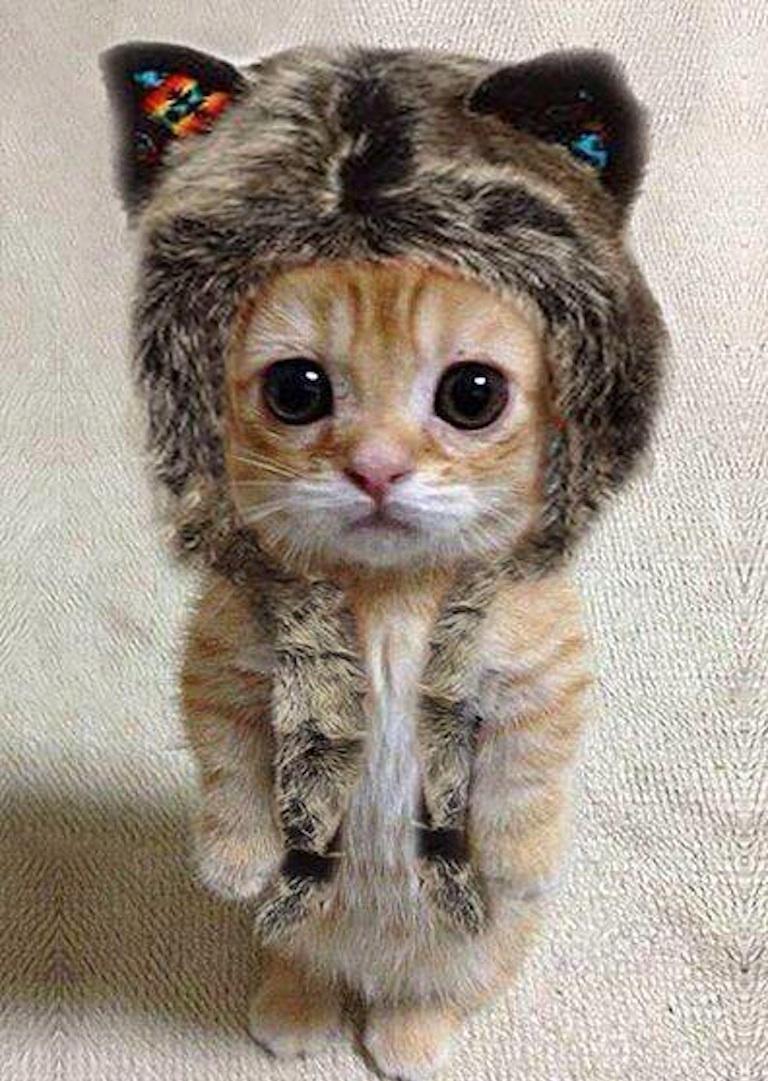 cat-in-furry-hat