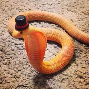 cute-snakes-wear-hats-101__700