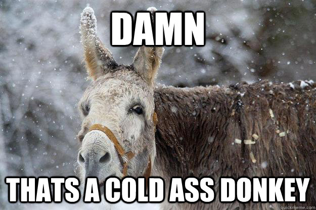 Damn-Thats-A-Cold-Ass-Donkey-Funny-Meme-Picture.jpg