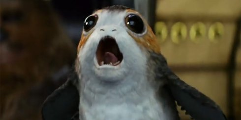 everything-we-know-about-porgs--the-penguin-like-creatures-from-star-wars-the-last-jedi